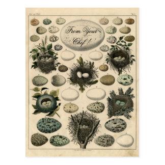 Vintage Birds Nests Egg illustration -Post Card Postcard