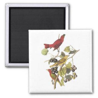 Vintage Birds On Berry Vine Square Magnet