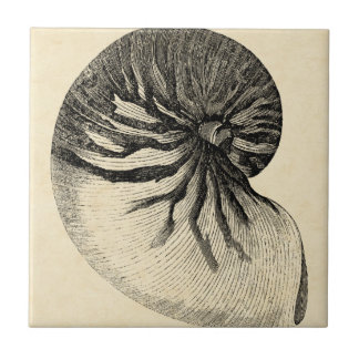 Vintage Black and White Conch Shell Small Square Tile