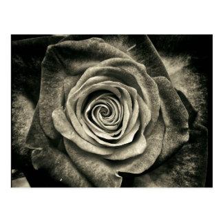 Vintage Black and White Rose Postcard