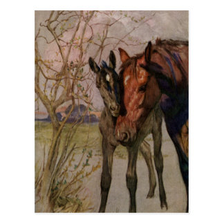 "Vintage Black Beauty horse ""My Mother and I"" Postcard"