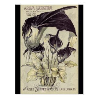 Vintage Black Calla Lilies Post Card