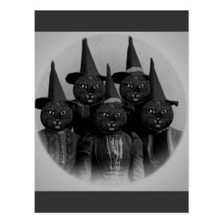 Vintage Black Cat/Witches Postcard