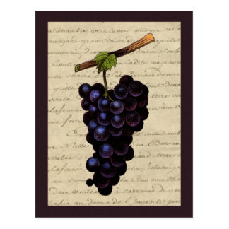 Vintage Black Grapes Post Card