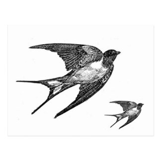 Vintage Black Swallow Design Postcard