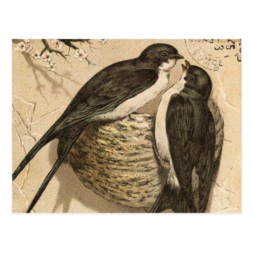 Vintage Black White Cute Love Birds Painting Post Cards