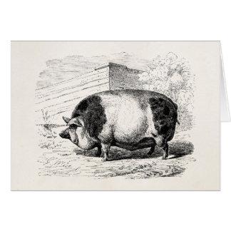 Vintage Black White Spotted Pig Swine Pigs Antique Greeting Card