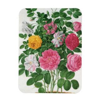 Vintage Blooming Flowers, Spring Garden Roses Rectangular Photo Magnet