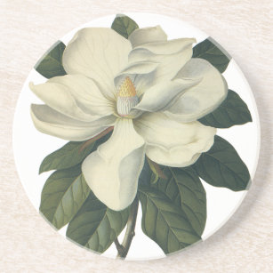 Vintage Blooming White Magnolia Blossom Flowers Coaster