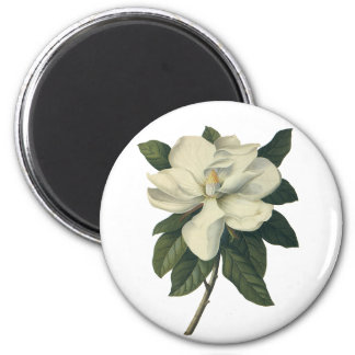 Vintage Blooming White Magnolia Blossom Flowers Magnet