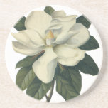 Vintage Blooming White Magnolia Blossom Flowers Sandstone Coaster