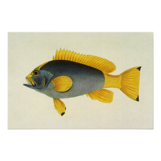 Vintage Blue and Yellow Grouper Fish, Marine Life