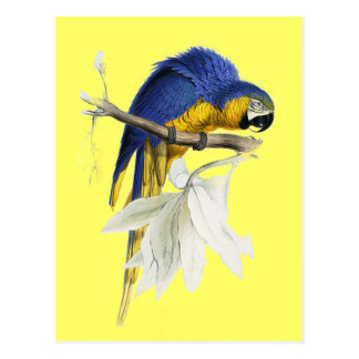 Vintage Blue And Yellow Macaw Parrot Postcard