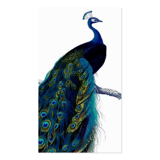 Peacock Template Colourful peacock business Peacock Pattern Outline