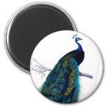 Vintage Blue Elegant Colourful Peacock 6 Cm Round Magnet