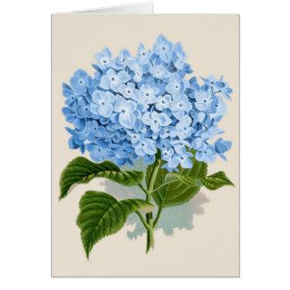 Vintage Blue Hydrangea Card