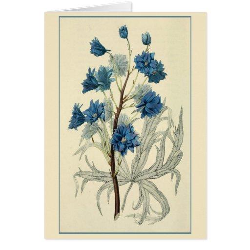 Vintage Blue Larkspur Flower Greeting Card