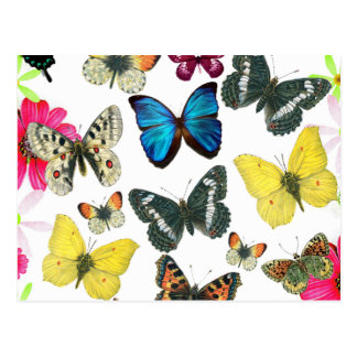 Vintage Blue Red Yellow Colourful Butterflies Postcards