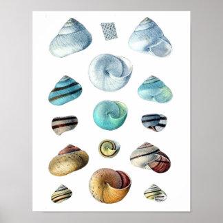 Vintage blue Seashells poster