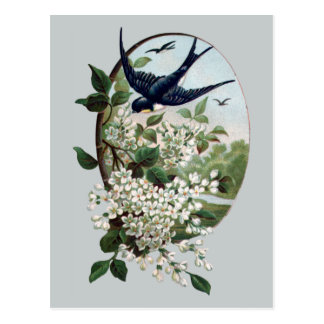 Vintage Bluebird and Branch of Blossoms Postcard