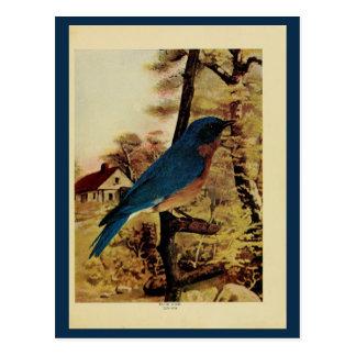 Vintage bluebird color litho photo postcard