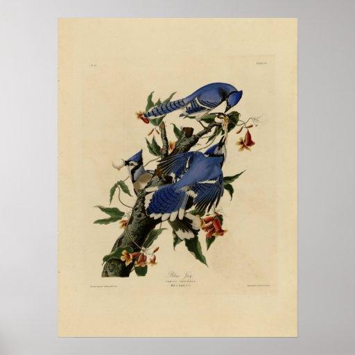Vintage Bluebird Painting Poster