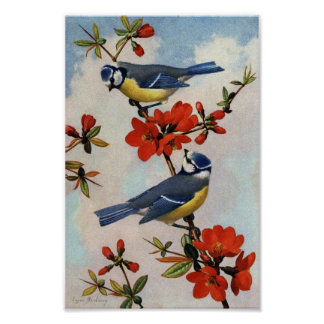 Vintage Bluebirds Red Blossoms Art Print Poster
