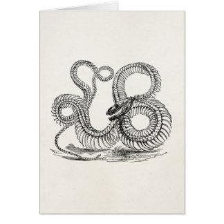 Vintage Boa Snake Skeleton Personalized Template Greeting Card