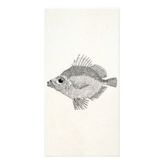 Vintage Boar Fish - Aquatic Fishes Template Blank