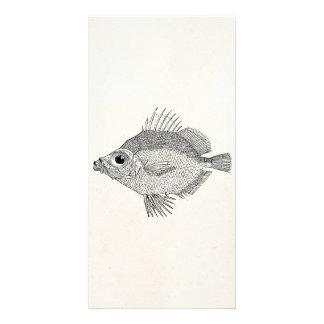 Vintage Boar Fish - Aquatic Fishes Template Blank Custom Photo Card