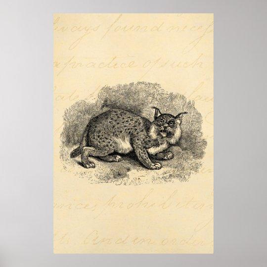 Vintage Bobcat 1800s Bob Cat Lynx Illustration Poster