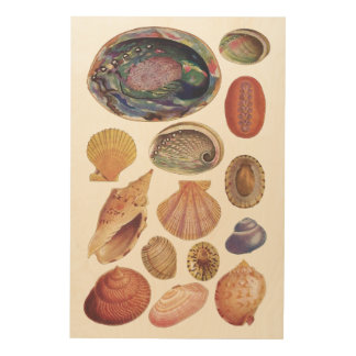 Vintage Book Of Seashells Wood Print