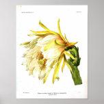 Vintage Botanical Cactus Poster