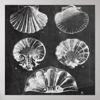 vintage botanical chalkboard beach sea shells print