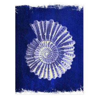 vintage botanical Coastal Blue White seashell Postcard
