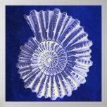 vintage botanical Coastal Blue White seashell Poster
