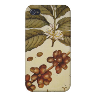 Vintage Botanical Coffee Picture iPhone 4/4S Case