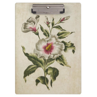 Vintage Botanical Floral Althea Frutex Clipboard