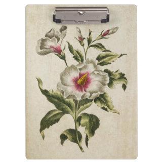 Vintage Botanical Floral Althea Frutex Clipboards