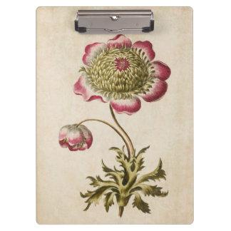 Vintage Botanical Floral Anemone Illustration Clipboard