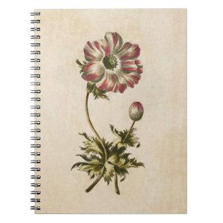 Vintage Botanical Floral Anemone Illustration Notebooks