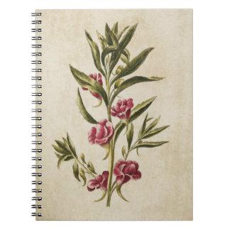 Vintage Botanical Floral Balsam Illustration Notebooks
