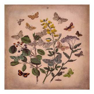 Vintage Botanical Floral Butterflies Rustic Pink Poster