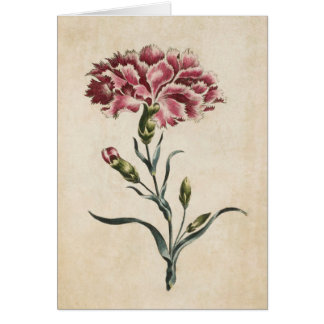 Vintage Botanical Floral Carnation Illustration Card