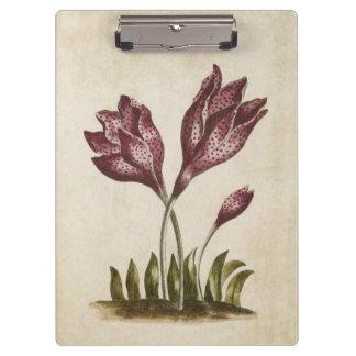 Vintage Botanical Floral Colchicum Illustration Clipboard