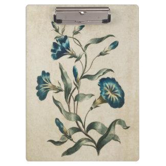 Vintage Botanical Floral Convolvulus Illustration Clipboards