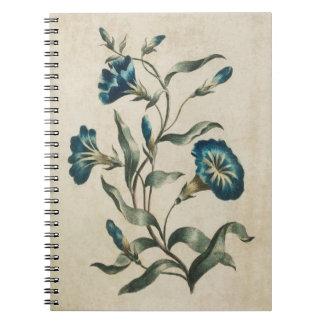 Vintage Botanical Floral Convolvulus Illustration Notebook