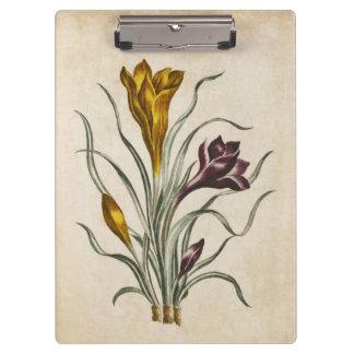 Vintage Botanical Floral Crocus Illustration Clipboard