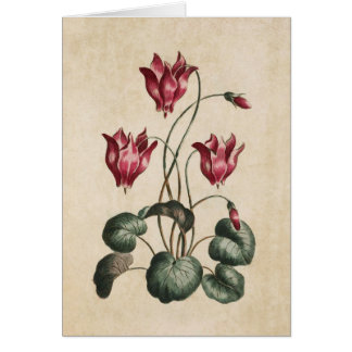 Vintage Botanical Floral Cyclamen Illustration Card