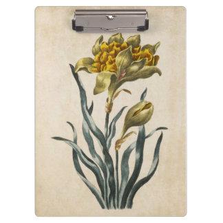 Vintage Botanical Floral Daffodil Illustration Clipboard